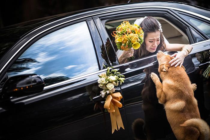 Najbolja fotografija vjenčanja 2015. iz kategorije Obiteljska ljubav